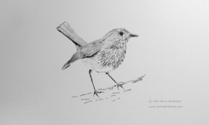 Playful Robin by Carrie Sanderson 2014 thumbnail