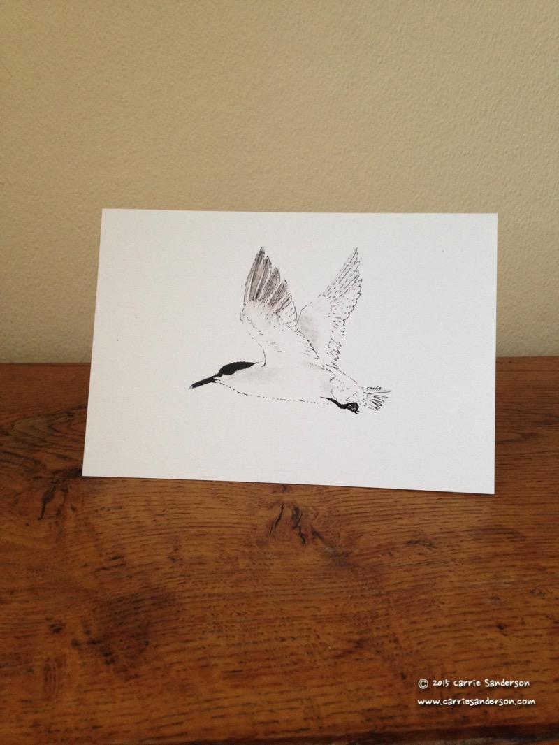 Savvy Sandwich Tern Greeting Card