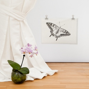 Swallowtail Butterfly Giclee Print - Carrie Sanderson