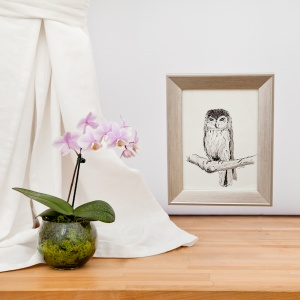 Small Owl Original Framed Drawing - Carrie Sanderson