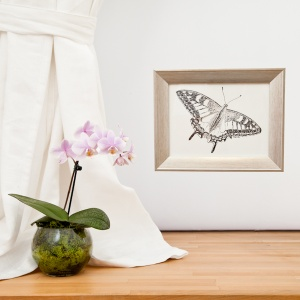 Swallowtail Butterfly Original Framed Drawing - Carrie Sanderson
