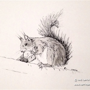 Nibble, Nibble, Red Squirrel - Carrie Sanderson Original