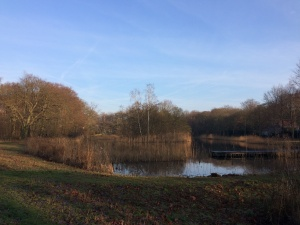 lake-and-woods-the-netherlands-december-2016