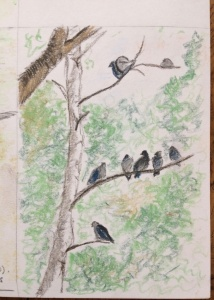 pastel-pencil-sketch-of-pigeons-in-a-tree
