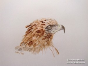 Buzzard watercolour