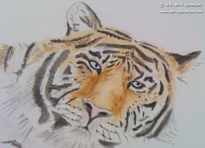 Tiger watercolour