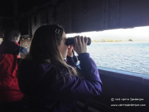 Carrie Sanderson Bird Watching