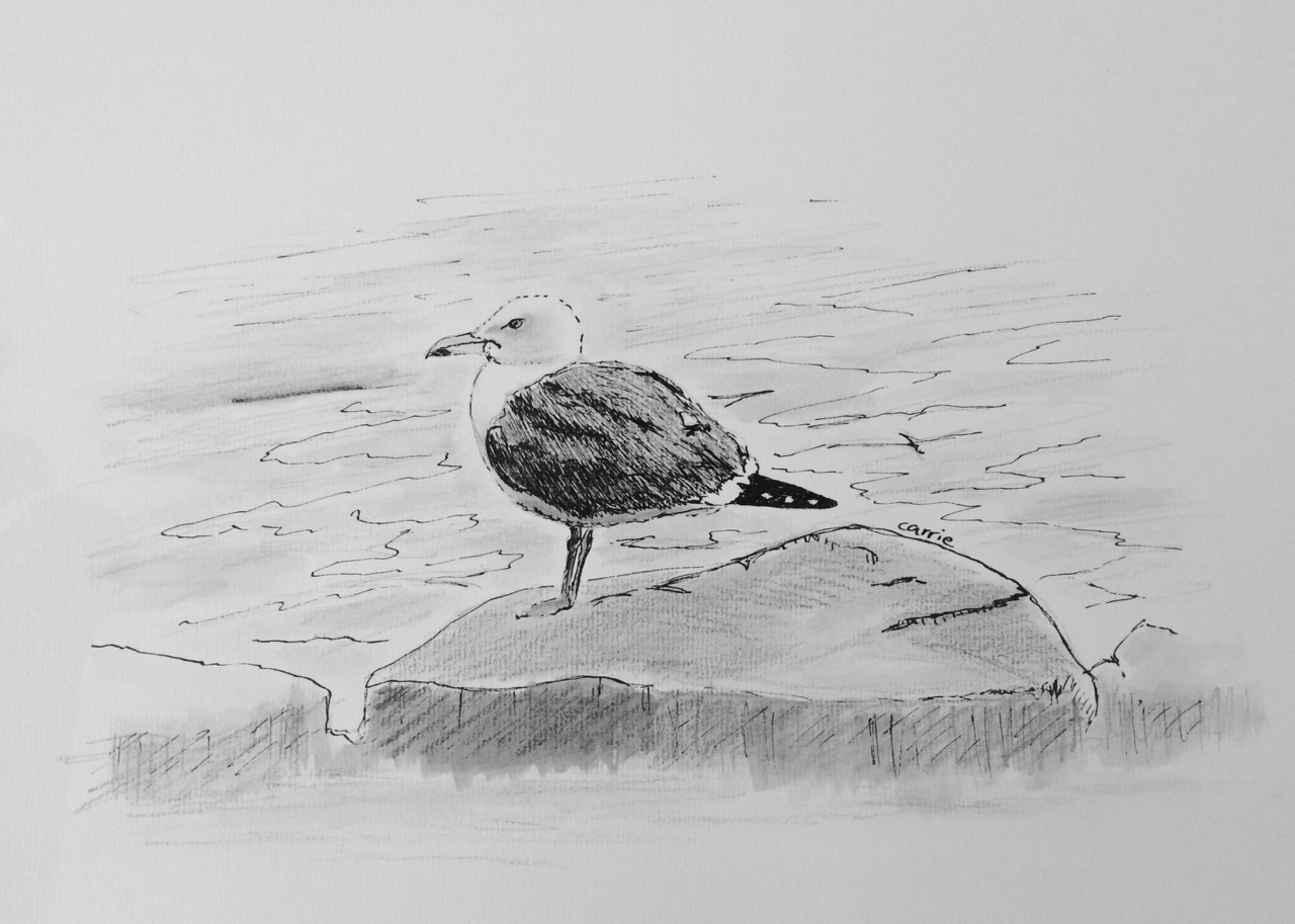 Waiting: A Poem About A Gull