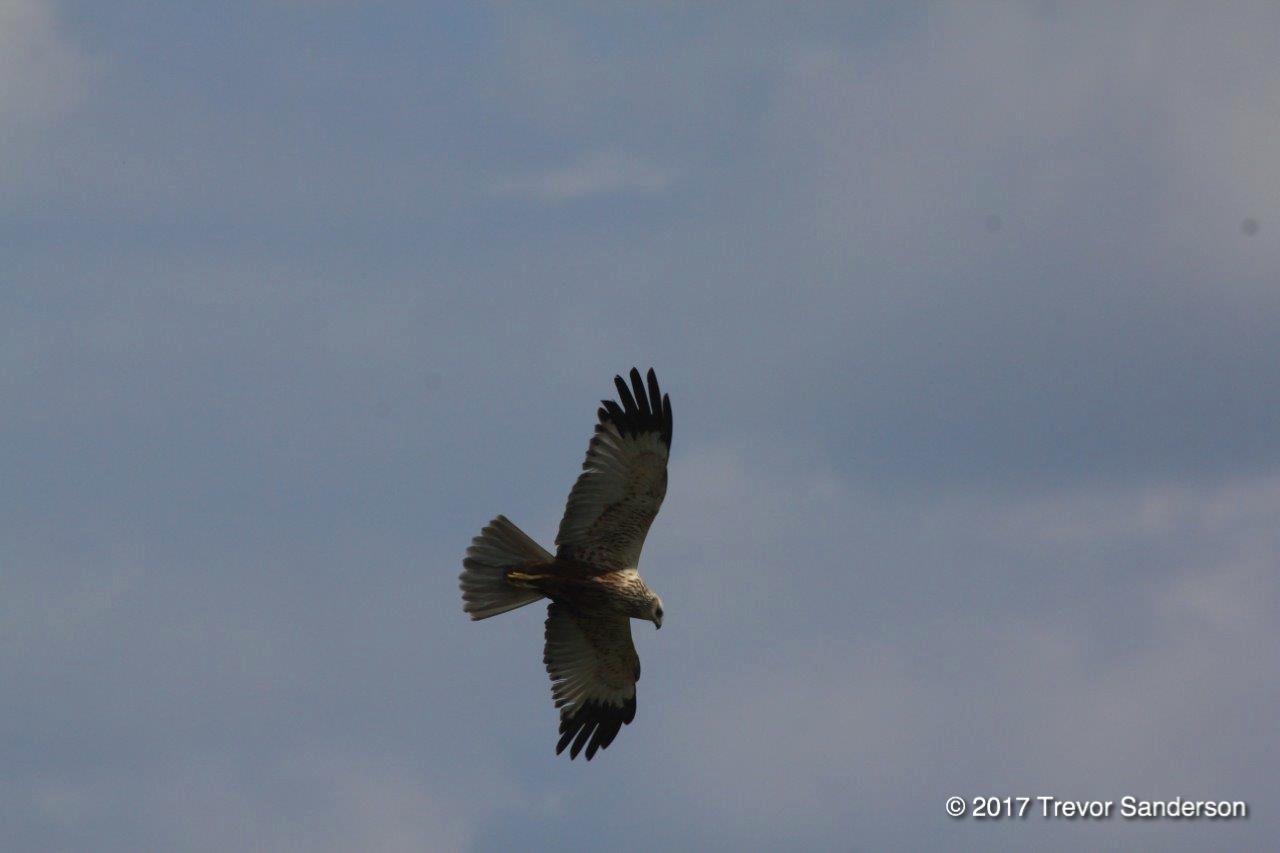 Bonding With My Dad Over Birds